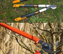 Une meilleure coupe-branche pour un jardin